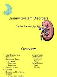 urinary system essay urinary tract research papers