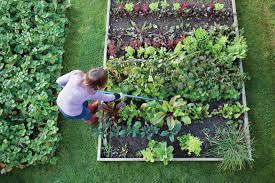 beginner gardening. Garden Tips For Beginners Beginner Gardening N