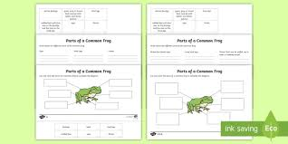 Parts Of A Frog Parts Of A Frog Differentiated Worksheet Activity Sheet