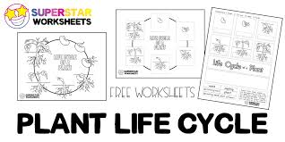 Separate them into two piles. Plant Life Cycle Worksheets Superstar Worksheets