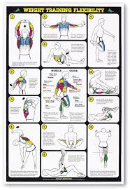 Weight Training Flexibility Stretching Professional Fitness