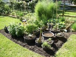 Small Picture Container Gardening for Effective and Functional Planting Ideas