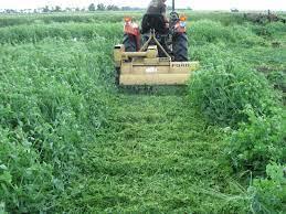 Module 3: Managing Green Manures | Pivot and Grow