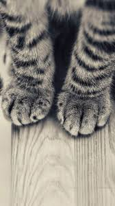 Iphone wallpaper glass animals Human Being Striped Kitten Legs Wooden Floor Iphone Plus Hd Wallpaper Appleinsider 60 Cute Animals Iphone Wallpapers You Would Love To Download