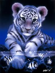 baby white tigers drawing. Simple White Tiger White Baby Tiger1 Artwork By Kentaro Nishino  Art  Inside Tigers Drawing A