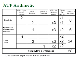 Atp Chart Chemiosmosis Adp Atp Concentration Gradient Potential