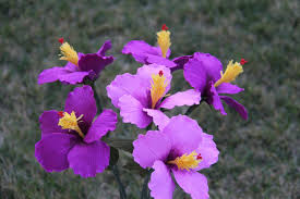 purple hibiscus essay book report jjk purple hibiscus essays rovan celebrates our earthly desires exquisite and functional objects of beauty that draw on the tones and textures of nature