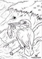 Vogelbescherming Kleurplaten Zonder Reclame