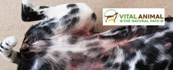 Cytopoint Injection Chart Cytopoint High Tech Answer To Itchy Dogs