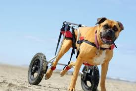 the 25 best dog wheelchairs of 2020