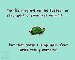 Turtle Quotes Turtle Turtle Jealous and People 8