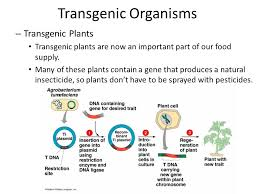 By studying the effects of the missing gene, researchers can better understand the normal function of the gene. The Basis For Transgenic Organisms Transformation The Incorporation Of A Piece Of Naked Dna Not Attached To Cells From One Organism Into The Dna Of Ppt Download