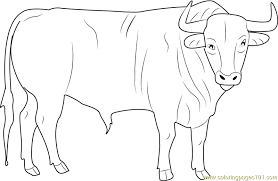 Small Picture Black Bull Coloring Page Free Bull Coloring Pages