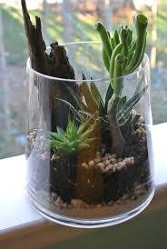 161 best  Terrariums & Succulents  images on Pinterest | Succulents  garden, Terrarium ideas and Gardening