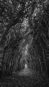 Nature trees, branches, bw #android ...
