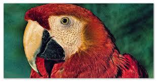 Доклад про папугаев Школьный доклад про попугаев