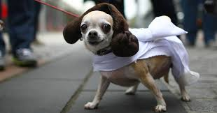 dog costumes star wars