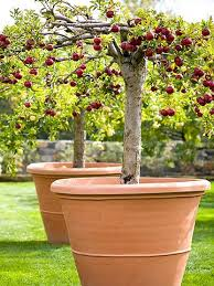 Best 25 Pruning Fruit Trees Ideas On Pinterest  Tree Pruning How Often Should I Water My Fruit Trees