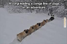 FunnyMemes.com • Cute memes - [Corgi leading a conga line of pugs] via Relatably.com