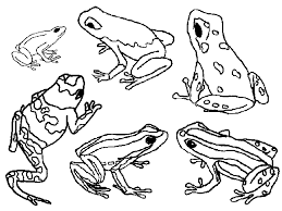 Small Picture Poison Dart Frog coloring page Animals Town Animal color