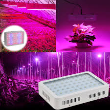 Growing Bonsai Under Led Lights Us 87 73 37 Off 60leds 20631lm Plant Grow Light 300w Ac85 265v Full Spectrum Vegetables Herbs Flowers Bonsai Lamp Greenhouse Indoor In Led Grow