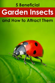quiet corner 5 beneficial garden insects and how to attract them quiet corner