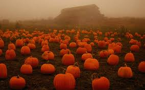 Halloween Pumpkins Desktop Wallpaper ...