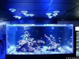 full image for lfs reef aquarium lit with led spotlights led reef aquarium lighting for