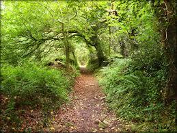 Image result for Nature walk