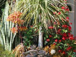 Small Picture Garden Plans Dry Gardens Using Irrigation and Aquaponics The