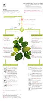 Plant Deficiency Diagram Aqua Calc Infographics