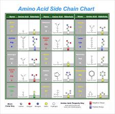 20 Amino Acids Chart Pdf Sample Amino Acid Chart 16 Free Documents Download In