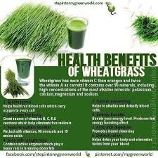 wheat gr juice side effects and