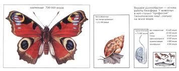 Многообразие животных Зоология Реферат доклад сообщение  Рис 11 Видовое разнообразие основа работы биосферы У животных в ней столько профессий экологических ниш сколько на земле видов