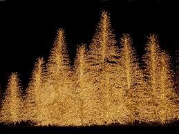 Christmas Lights Led Christmas Lights On Seasonchristmascom Merry Christmas