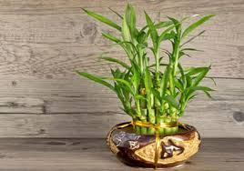 plants for office cubicle. Plants That Suit For Your Office Cubicle