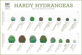 Paris Blues Size Chart Hydrangea Comparison Charts Proven Winners