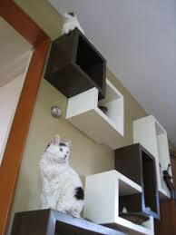 modern cat wall shelves tree alternatives for up to date