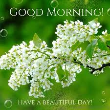 Lovely Good Morning Images With Quotes Best of 24 Lovely Good Morning Wishes With Flowers