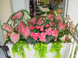 20 Best Containers I Planted Images On Pinterest  Container Container Garden Ideas For Shade