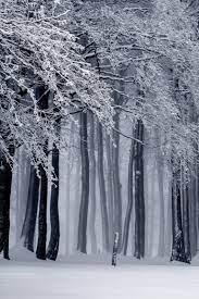 Snowy Forest, Winter Ultra HD Desktop ...