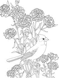 Free Printable Coloring Pageohio State Bird And Flower Cardinal