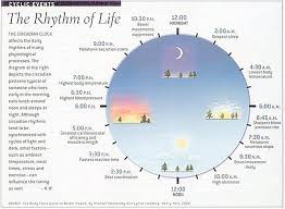 Circadian Rhythm Chart The Rhythm Of Life 3 Chinese