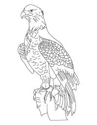 Eagle Coloring Pictures Bald Eagle Coloring Page New Pledge Of
