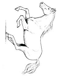 Horse Coloring Pages Costume Free Printable Mustang Horse Coloring