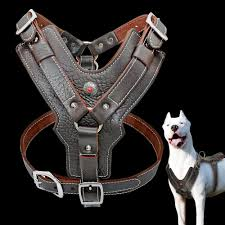 details about genuine leather dog harness heavy duty good quality harness vest for pit bull