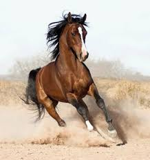 wild horses galloping. Plain Wild Inspirational Images Throughout Wild Horses Galloping S
