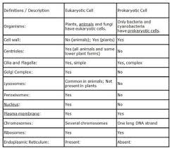 The Differences Between Prokaryotic Cells And Eukaryotic