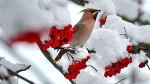 La playlist classique de l'hiver