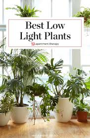 Houseplants For Low Light Areas 8 Houseplants That Can Survive Urban Apartments Low Light